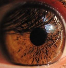 Apple of your eye 3